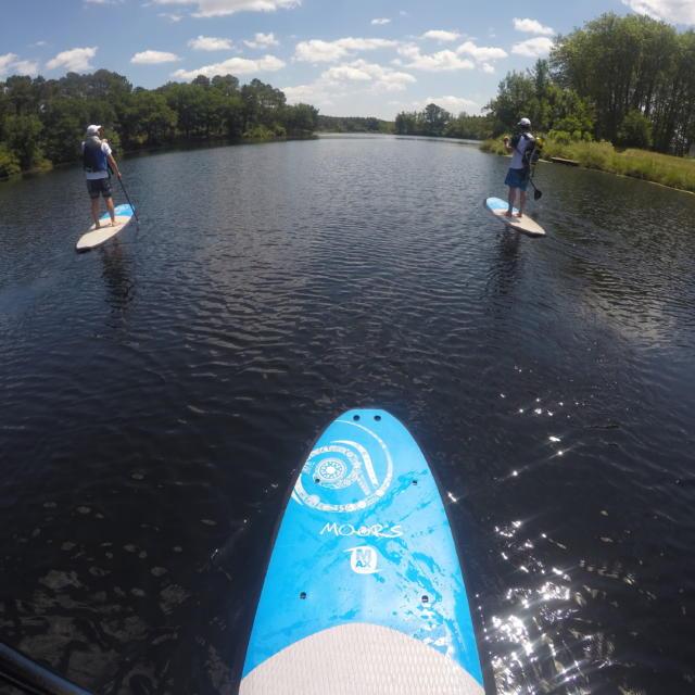 Balade en Paddle sur le lac d'Uza   Côte Landes Nature