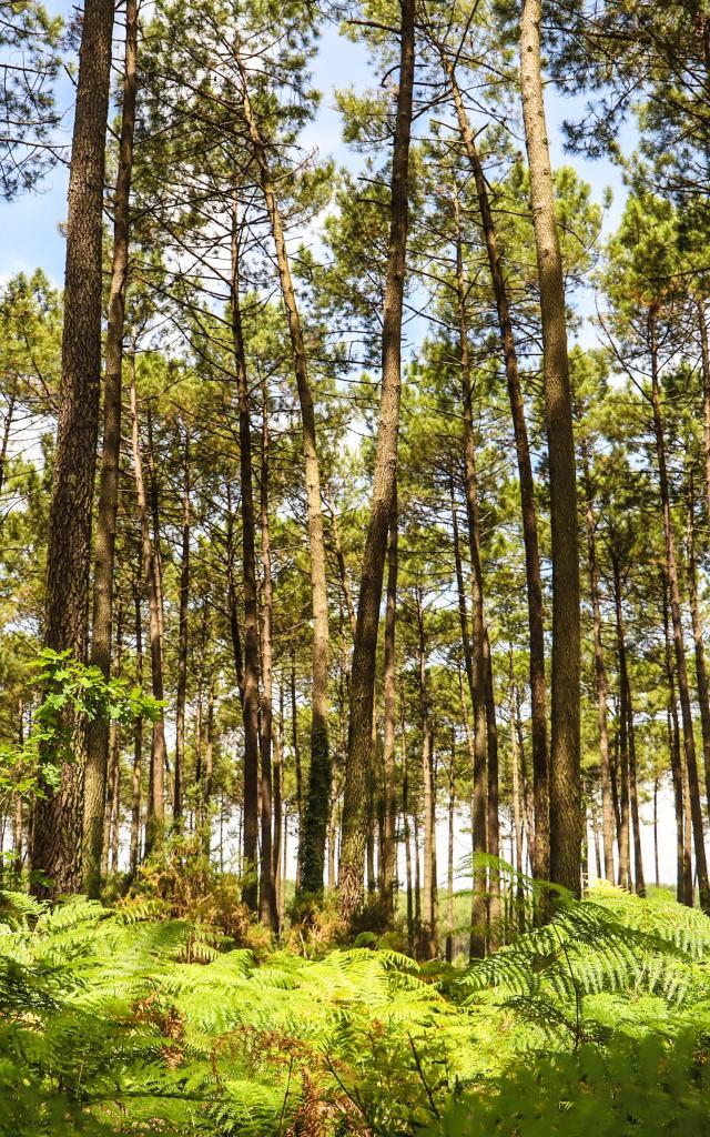 Forêt des Landes | Côte Landes Nature
